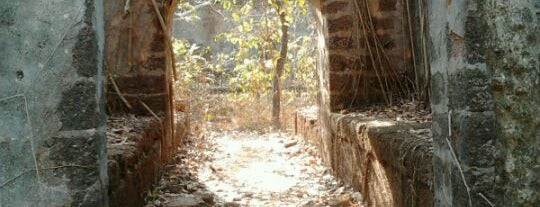 Redi Fort is one of India places to visit.