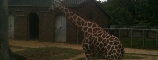 ZSL London Zoo is one of Best of World Edition part 1.