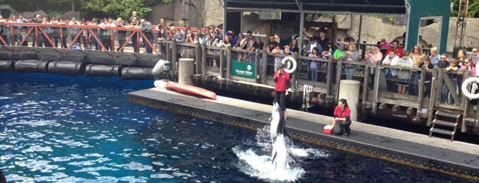 Vancouver Aquarium is one of เที่ยว Vancouver, Canada.