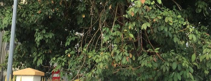 Pokok Getah (The Rubber Tree) is one of Explorer @ Kuala Kangsar.