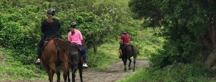 Triple L Ranch Maui Horse Backriding & Bullys Burgers is one of Molokai Cowgirls - Horses in Hawaii.