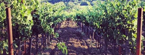 Quivira Vineyards and Winery is one of Best Healdsburg Wineries.