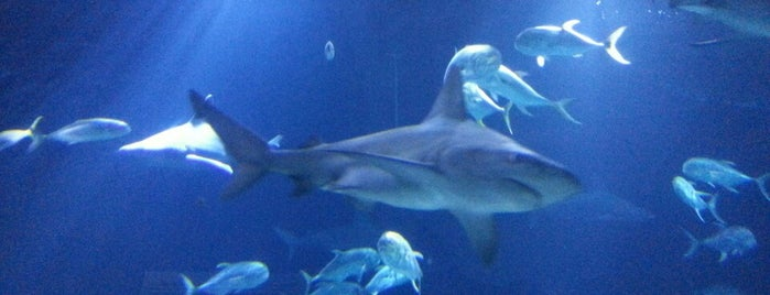 Henry Doorly Zoo and Aquarium is one of Omaha Culture.