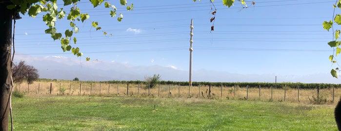 Zorzal Wines is one of Mendoza.
