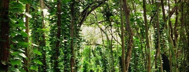 Hoopii Trail is one of Kauai.