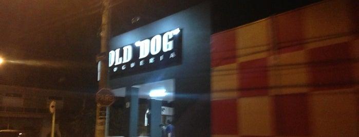 Old Dog Dogueria is one of Bom e barato em Bauru.
