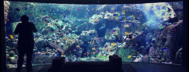 The Lost Chambers Aquarium is one of Best places in Dubai, United Arab Emirates.