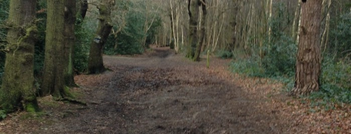 """Petts Wood Woods is one of Wood""""Forest""""meditazione_ Kent/East SusseX."""