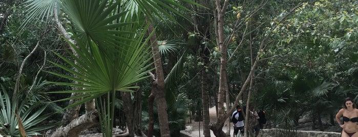 Cenote Cristalino is one of Tempat yang Disukai Panna.