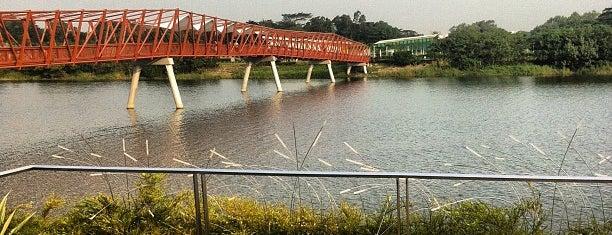 Lorong Halus Wetland is one of Trek Across Singapore.