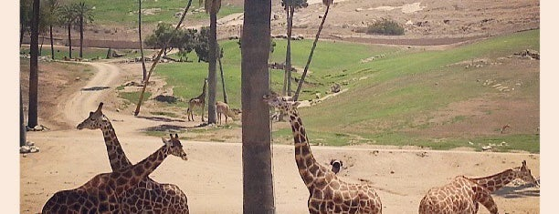 Wild Animal Park Cart Safari is one of USA San Diego.