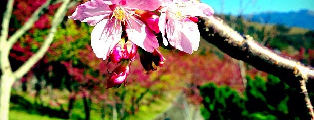 小瑞士花園 Small Swiss Garden is one of Taiwan.