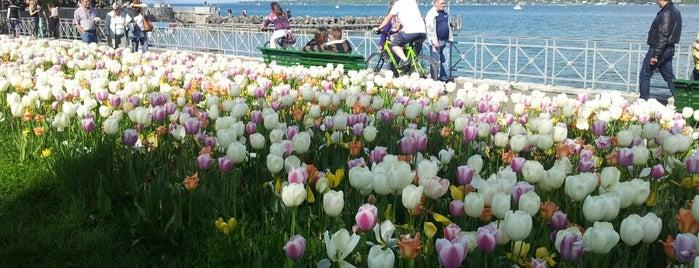 La Perle du Lac is one of Geneva.