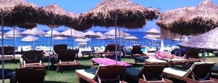 Mambo Beach Club is one of Orda burda surda.