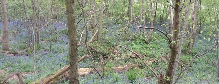 """Perry Wood is one of Wood""""Forest""""meditazione_ Kent/East SusseX."""