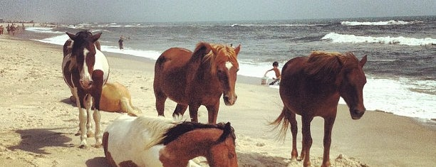 Assateague Island National Seashore (Maryland) is one of National Parks.