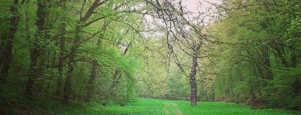 Slavičí údolí is one of Gardens, Parks and Forests in Prague.
