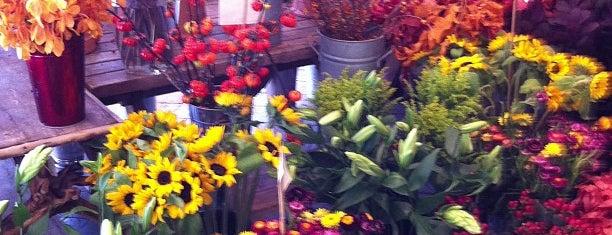 Moe's Flowers is one of FOOD-SHOP.