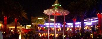 Vegas Nightlife!