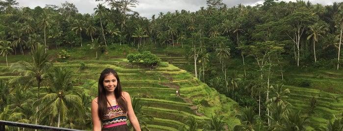 Rice Terraces Ubud Kaja is one of Bali.