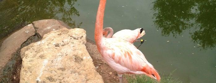 Abilene Zoo is one of abilene things.