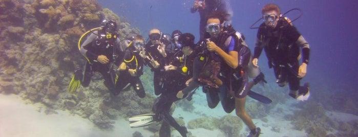 Gordon Reef is one of Be Charmed @ Sharm El Sheikh.