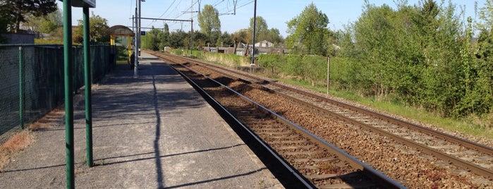 Station Schelle is one of Bijna alle treinstations in Vlaanderen.