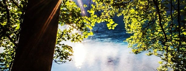 Radnor Lake State Park is one of Places To Visit In Nashville.