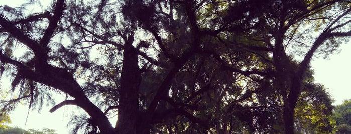 Aquário Parque da Luz is one of SP - lugares.