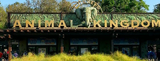 Disney's Animal Kingdom is one of things done with the family and doug.