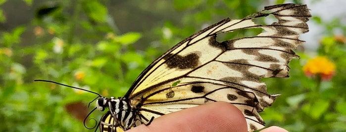 Palawan Butterfly Garden is one of Filipinler-Manila ve Palawan Gezilecek Yerler.