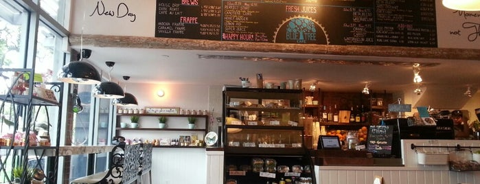 Blue Tree Café is one of The 15 Best Places for Espresso in Honolulu.