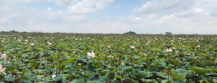 ทะเลบัวแดง is one of Надо посетить.