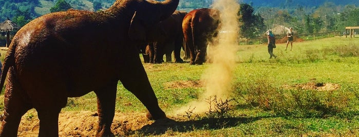 Elephant Nature Park is one of Chiang Mai, Thailand.