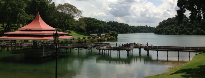 MacRitchie Reservoir Park is one of Singapore to do list.