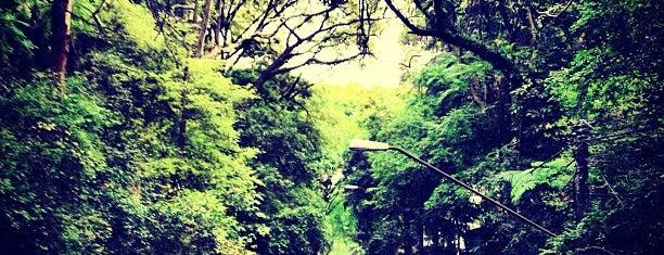 Parque Tenente Siqueira Campos (Trianon) is one of Já Fui SP.