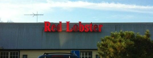 Red Lobster is one of Favorite Food.
