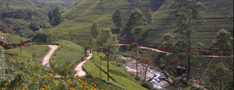 Mackwoods Labookellie Tea Center is one of Trips / Sri Lanka.