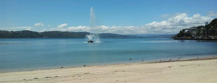 Oriental Bay is one of The coolest little capital in the world.
