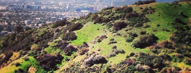 Runyon Canyon Summit is one of Cool things to see and do in Los Angeles.