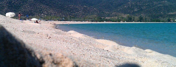 Sykia Beach is one of 🌞🌊Chalkidiki-->to The Beach 🐋🐬🐟🐠🐡🦀.
