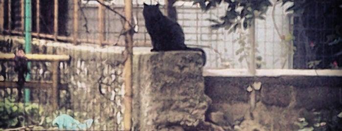 Καραβατιά is one of Γιάννενα.