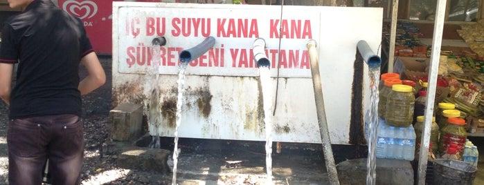 Pınarbaşı Dinlenme Yeri is one of yeni yerler.