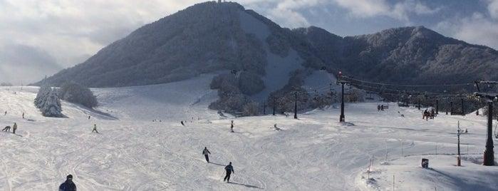 木島平スキー場 is one of スキー場.
