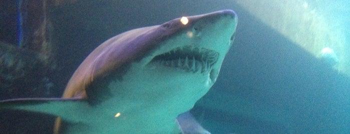 North Carolina Aquarium at Pine Knoll Shores is one of Explore NC.
