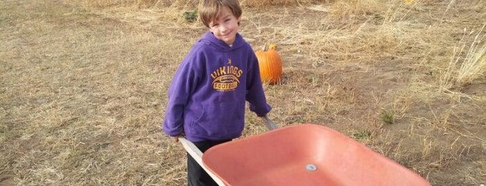 Sleepy Hollow Pumpkin Farm is one of Fall Bucket List.