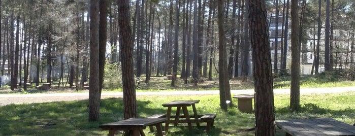 Taşdelen Mesire Alanı is one of İstanbul'daki Park, Bahçe ve Korular.