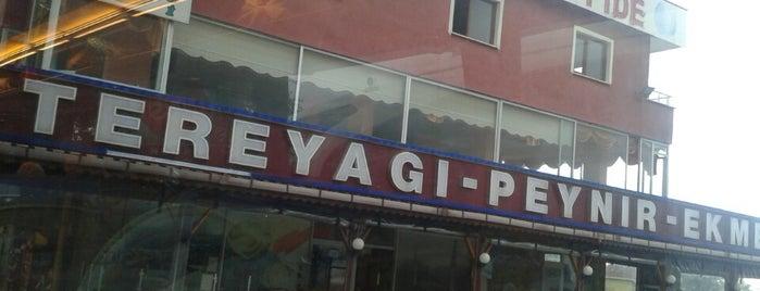 Dillioglu is one of Yemede yanında yat....