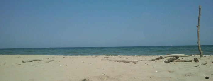 Spiaggia Libera Lido Di Classe is one of Beach.