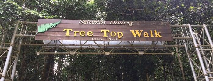 Tree Top Walk is one of Cuti-cuti malaysia.